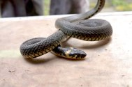 Sneaky Snake just visting